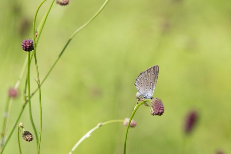 Evropska sredstva za ohranjanje in izboljšanje stanja ogroženih živalskih vrst in habitatov v Vipavski dolini