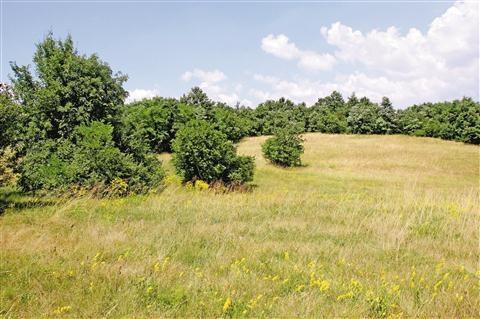Evropska sredstva za prvi projekt s področja upravljanja območij Natura 2000
